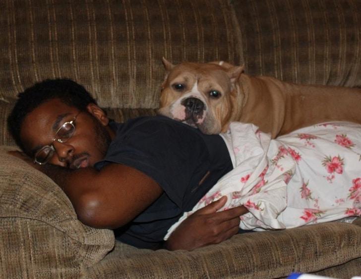 kutyák szeretik a gazdit