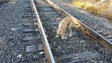 A kutya felé sétált és látta, hogy a sínekhez van kötve