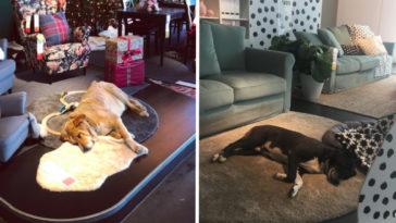 Az IKEA beengedte a kóbor kutyákat az üzletbe