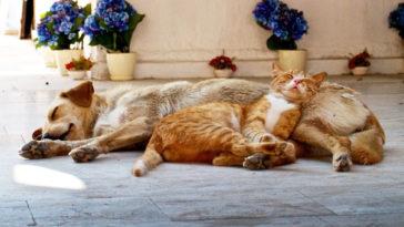 Az igazi macskák kutyákon alszanak
