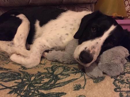 Bakancslistát készített daganatos kutyájának a szerető gazdája