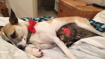 Macskát kapott maga mellé a szorongó kutyus