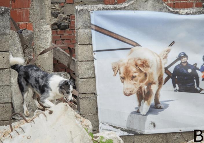 Magyar kutyák a legjobb mentőkutyák között