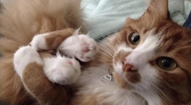 a kutyák és a macskák igazából állatbőrbe bújt emberek