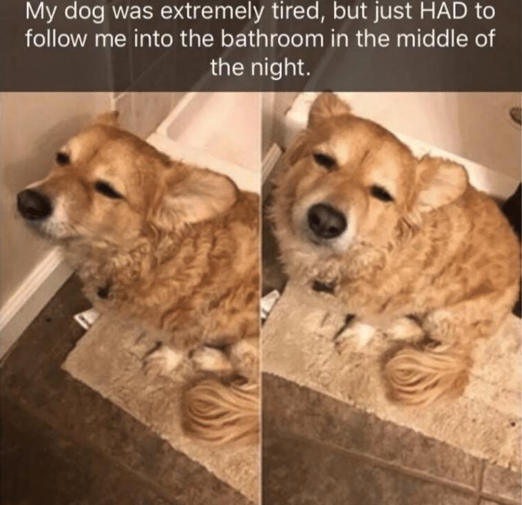 a kutyák a világ legkedvesebb, de legőrültebb teremtményei