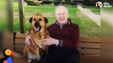 alzheimeres gazdáját látogatja az idős otthonban az utcán talált kutya5