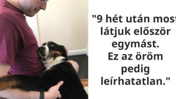 az állatok hűsége és szeretete nem ismer határokat