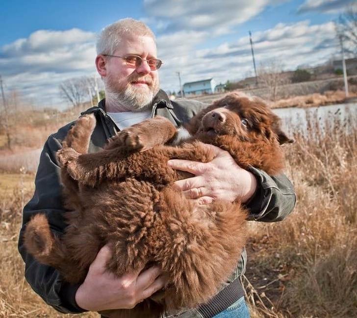 az újfundlandi kutyák hatalmas testbe bújt angyalok