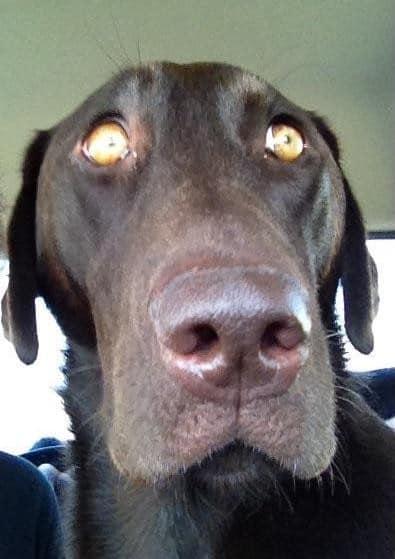 csalódott kutya, akit elárult a gazdi