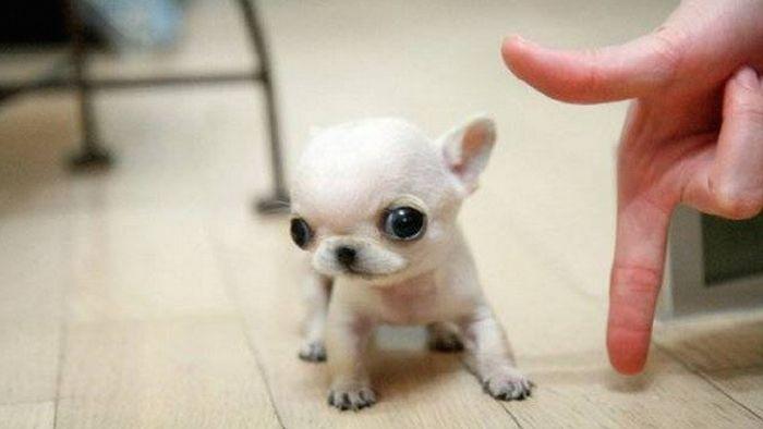 cuki kutyák, aki ellopja a szívünket