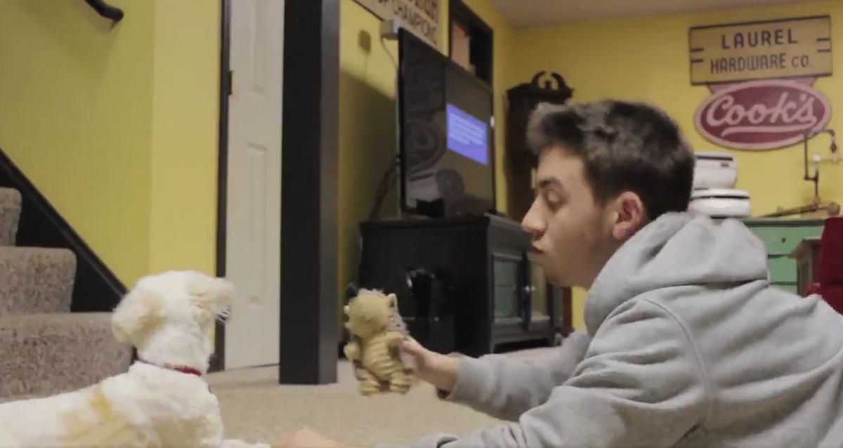 fiú vigyázott a kutyára