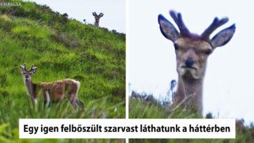 fotogén állatok