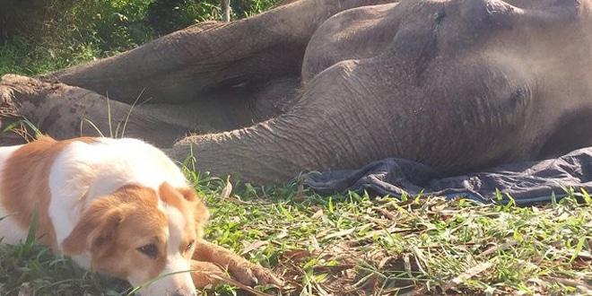 haldokló barátját támogatta a kutya