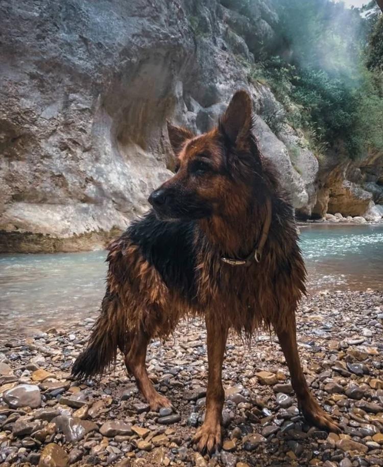 idős kutyákkal is csodálatos az élet
