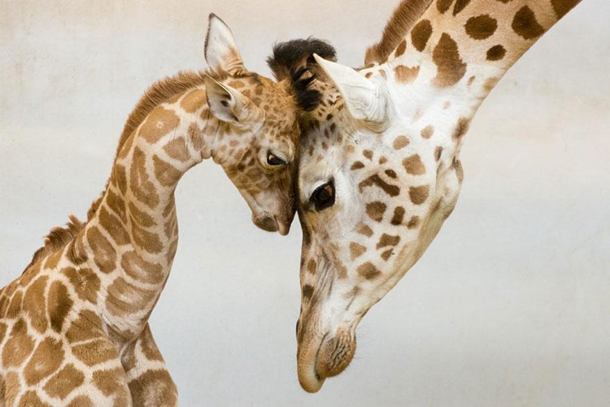 imádnivaló állatcsaládok