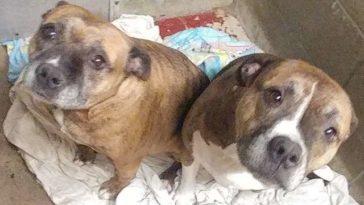 két éve várnak az örökbefogadásra a kutyák