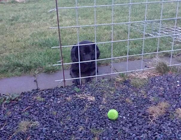 kellemetlen helyzetbe került kutyák