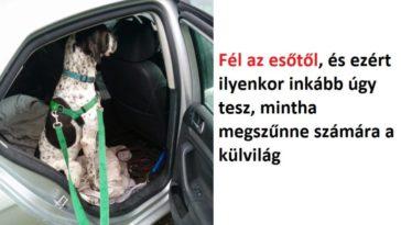 kutyák a saját árnyékuktól is félnek