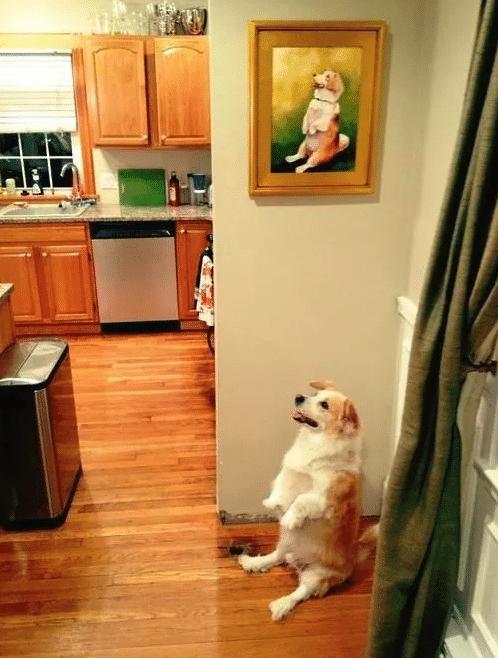 kutyák nevetségesen viselkednek