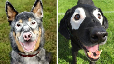 kutyák vitiligo betegséggel