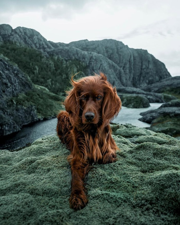 kutya és gazdi együtt fedezi fel norvégiát