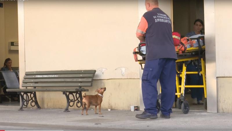kutya vár a kórház bejárata előtt