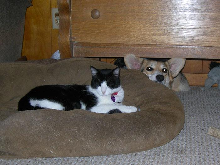 macskák kiakasztják a kutyákat