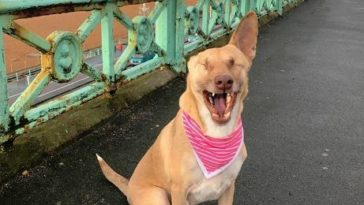 maggie túlélte a kínzást és terápiás kutya lesz
