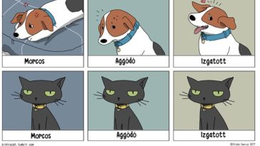 vicces különbség a kutyák és macskák között