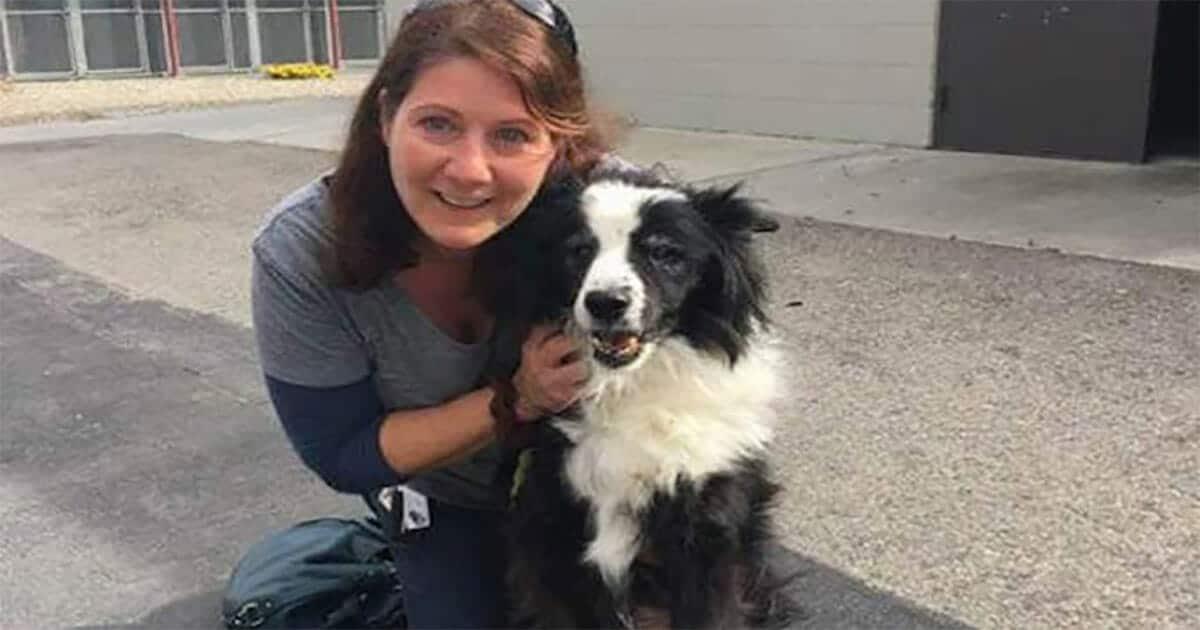 A család otthagyja a 17 éves kutyájukat egy menhelyen