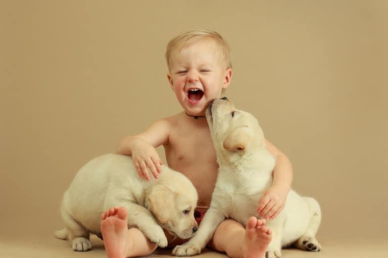 A kutyák óvják meg a betegségtől a csecsemőket