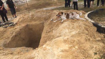 A temetőig követte szeretett gazdáját