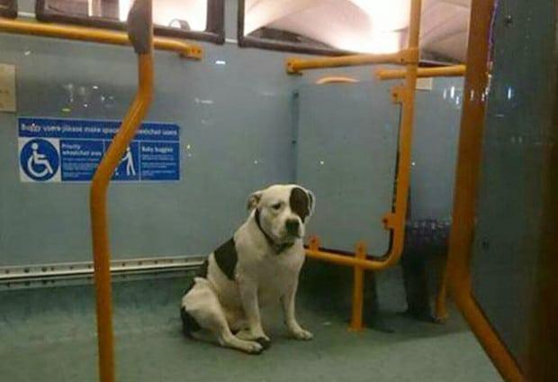 buszon hagyták a kutyát