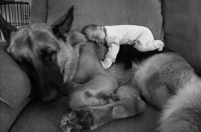 gyerekek és kedvencek