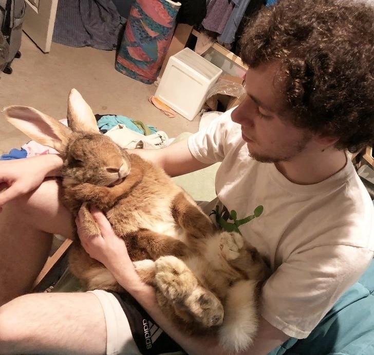 szívhez szóló sztorik háziállatokról