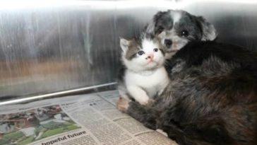 Árva kiscicát nevel a hajléktalan kutyus