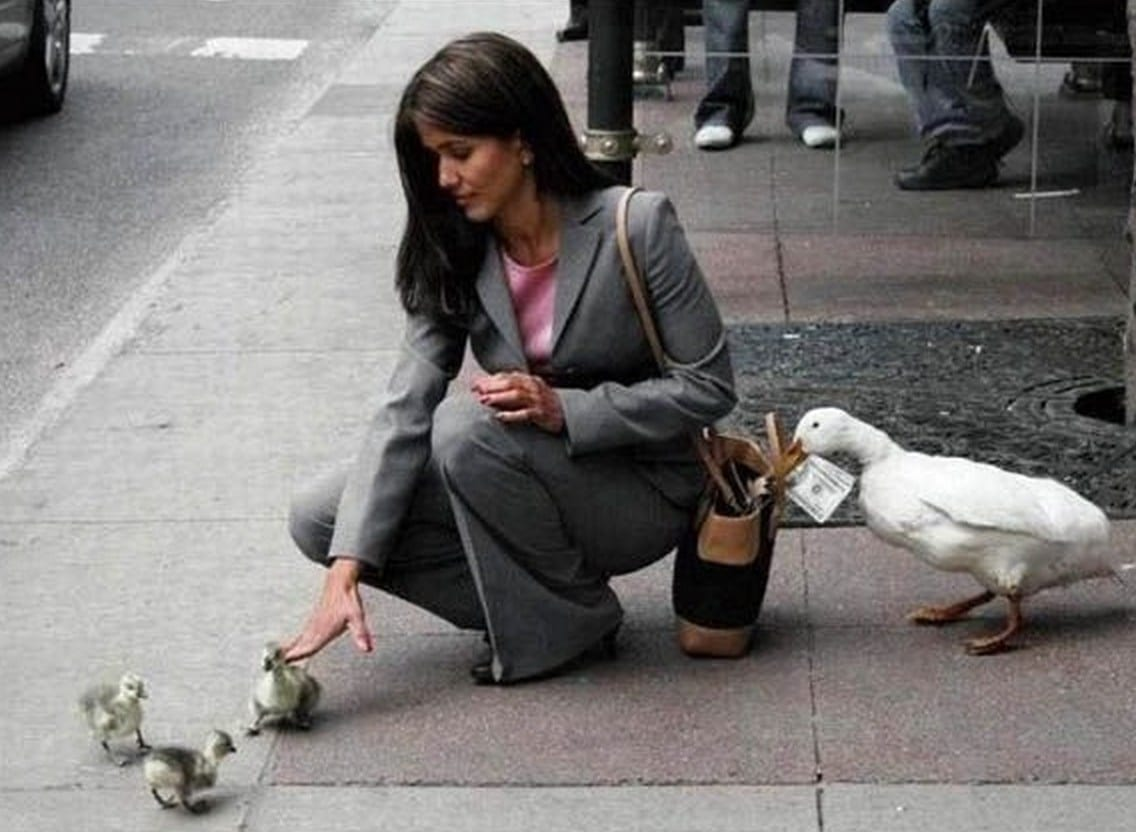 állatok, akik segítenek egymásnak
