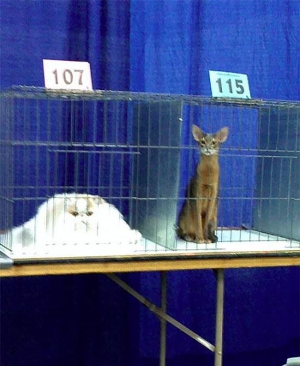 állatok elolvadtak