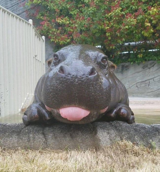 állatok kinyújtották a nyelvüket