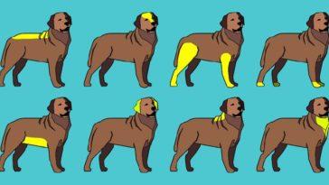 így masszírozd a kutyád