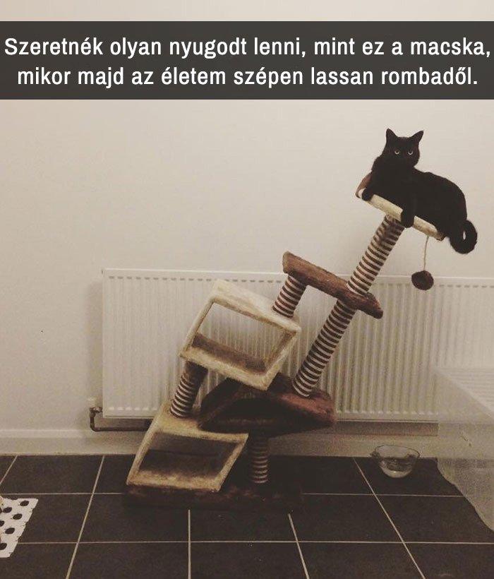 über vicces macskás Snapchat-üzenet