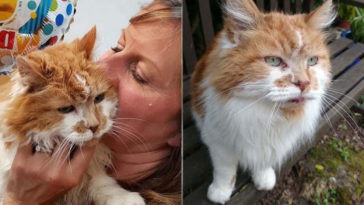 1988-ban lett egy macskája