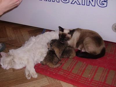 4 magára hagyott cicát talál a gazda