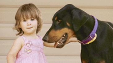 A család egy kóbor kutyát fogad örökbe