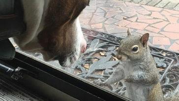 A család megment egy bébi mókust