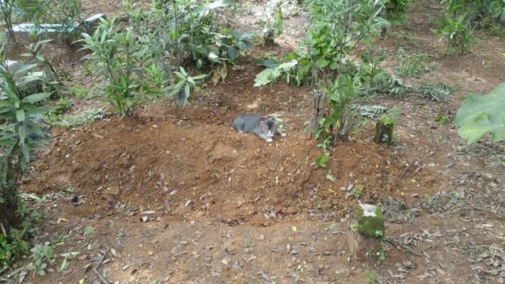 A férfi élelmet és vizet hagyott a temetőben
