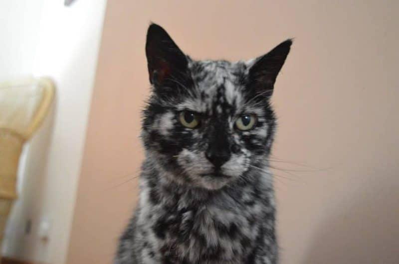 A férfi örökbe fogadta a fekete kiscicát