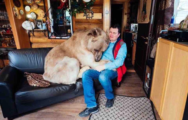 A férfi egy árva kis medvét vesz magához