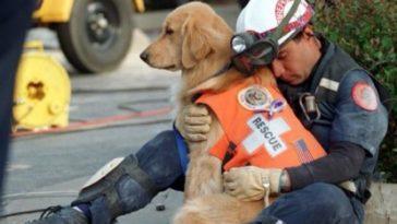 Ezek a képek a gazdi és a kutya közötti különleges és mély kapcsolatról szólnak. Kérünk, hogy oszd meg barátaiddal a cikket, ha Te is szereted a kutyákat.