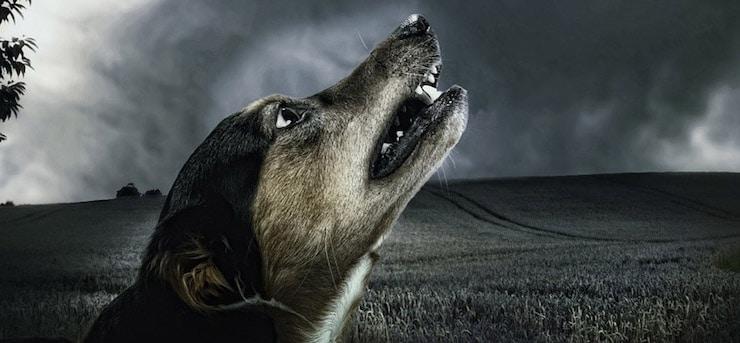 Az állatok látják a halált